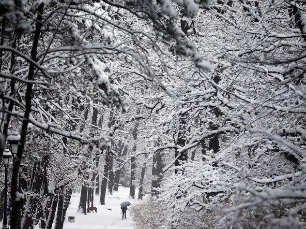 Столицу Российской Федерации нанеделе ожидает оттепель с маленьким похолоданием