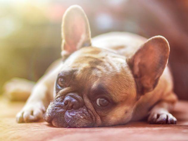 Ученые выяснили музыкальные вкусы собак