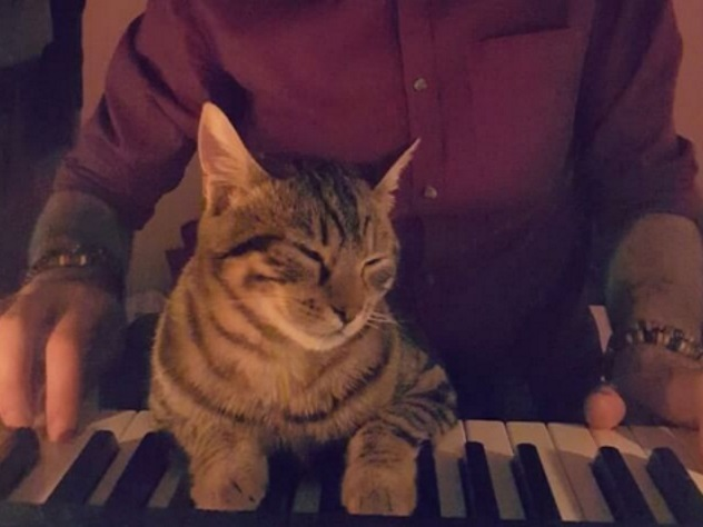 Турецкая кошка-меломанка полюбилась всему миру