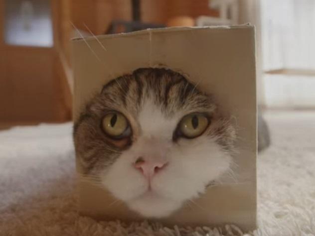 В книжке рекордов Гиннесса выбрали самого известного вмире кота