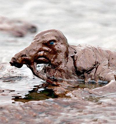 В нефтяном пятне умерли миллионы птиц