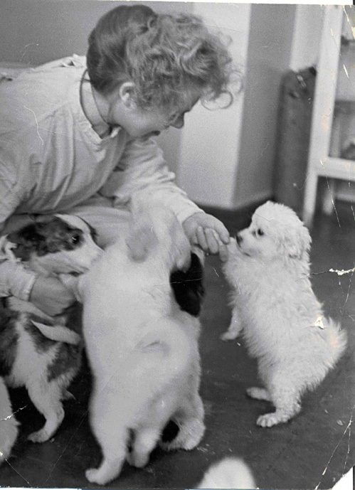 Первые щенки Стрелки - справа - Пушинка подаренная Жаклин Кеннеди