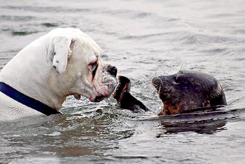 Боксёр пропустил удар тюленя