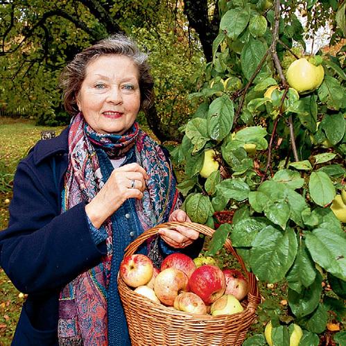 Нынешний год выдался необычайно урожайным на яблоки