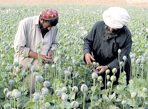 После прихода США в Афганистан вся экономическая деятельность страны свернулась к производству героина