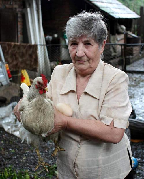 Яйцо-рекордсмен снесла обычна курица