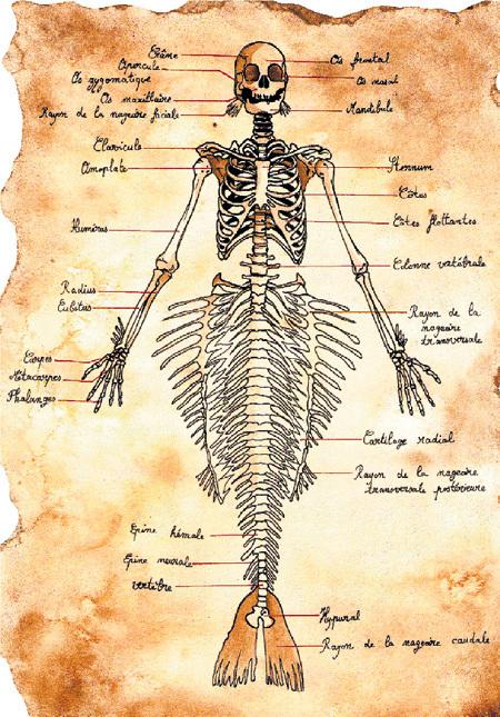 Рисунки русалок делали ещё моряки Христофора КОЛУМБА и другие путешественники древности