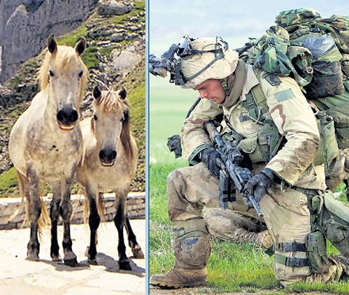 На обоих фото - «пиндосы». Только слева - это лошадки в Греции, а справа - увешанный до ушей амуницей солдат армии США