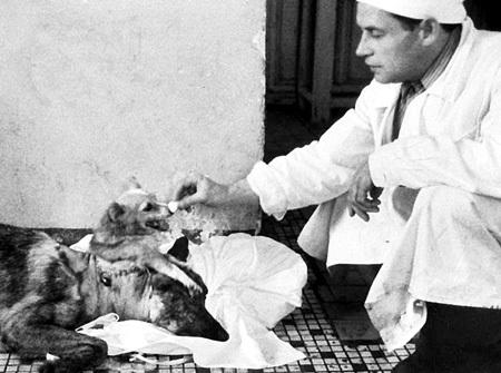 В 1954 году основоположник мировой трансплантологии Владимир ДЕМИХОВ пришил к шее немецкой овчарки голову и туловище щенка. Щенок мог лакать молоко, которое выливалось из шеи, иногда две головы ссорились. Удивительное создание прожило шесть дней