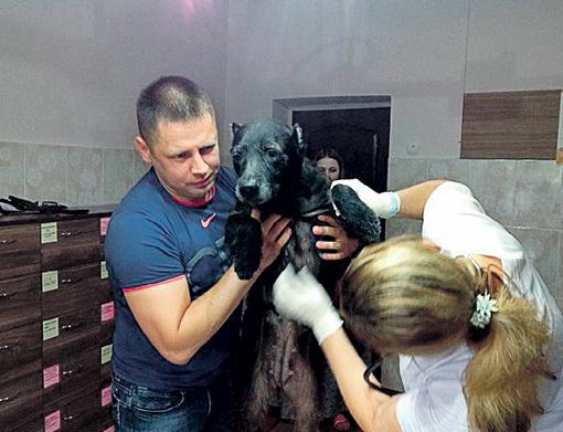 ...неравнодушные люди отвезли её к ветеринару. Фото: givepaw.ru