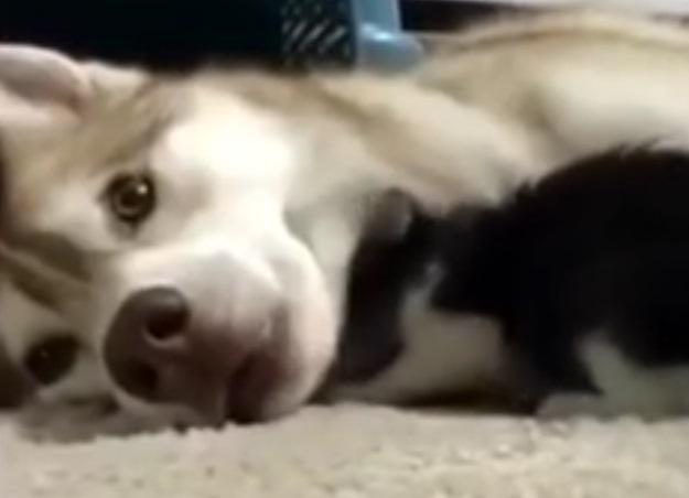 (Фото: кадр из видео)