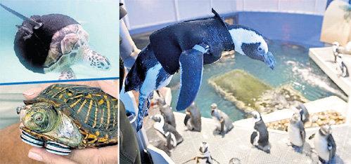 Черепашки и пингвин приобрели новый имидж