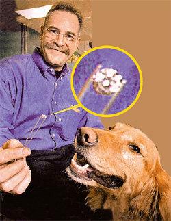 Джордж КАУФМАН очень доволен, что ретривер вернул ему брюлик естественным путём
