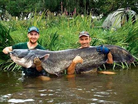 Немецкие рыбаки с трудом вытащили чудо-сома из воды