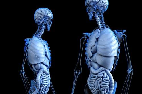 Сам по себе человек – существо худенькое. Фото: pixabay.com