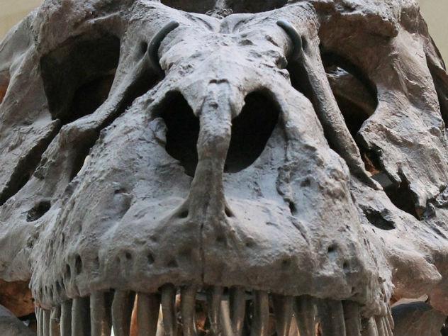 Ученые обнаружили наМадагаскаре останки первого гигантского крокодила