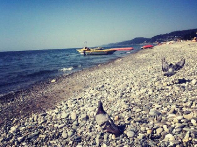 Российские туристы предпочитают отдыхать в Крыму. На втором месте по популярности Сочи и Краснодар. Кстати, ездят люди в основном семейные и с детьми.