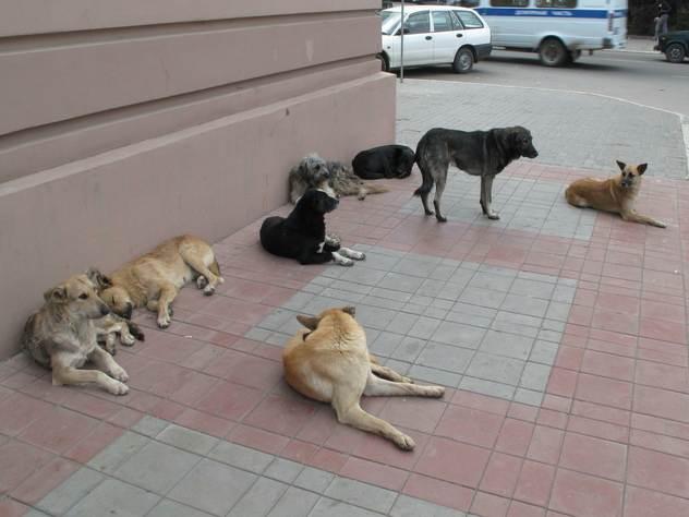 Российские собаки не любят велосипедистов — за английским журналистом они гнались 3 километра.