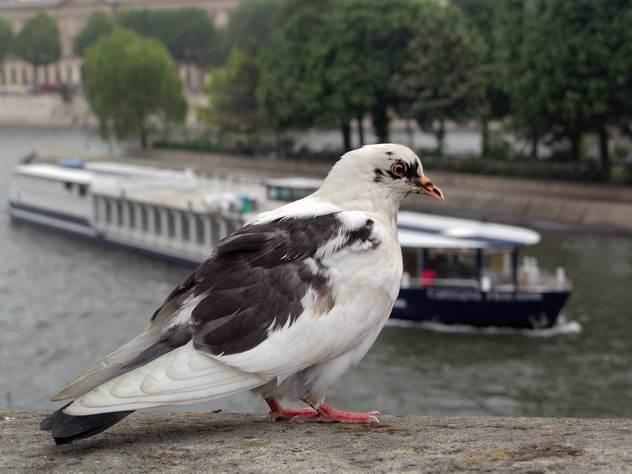 Даже настоящие птицы принимают китайские копии за своих товарищей.