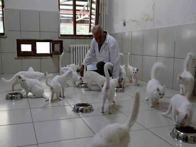 Центр по разведению ванских кошек.