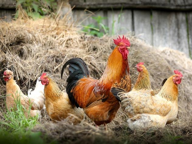 Министерство сельского хозяйства Казахстана запретило ввоз товаров, которые производятся на 36 российских птицефабриках.