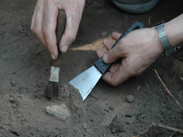 Находка в Кировской области проливает свет на историю млекопитающих.