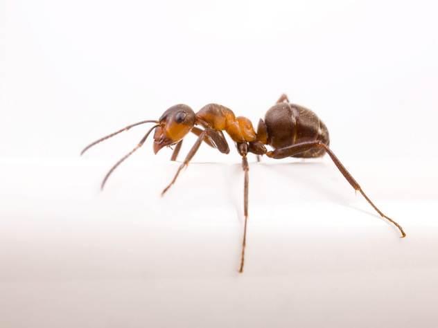 Кристина Фокс знает, чего боятся муравьи.