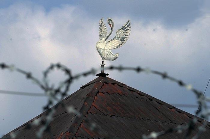 Колония «Белый лебедь». Изображение: Алексей Журавлев / Архив «КП»