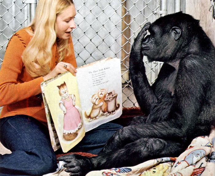 Умершая год назад в США горилла Коко мастерски владела жестовым языком. Этому ее научила зоопсихолог Франсин Паттерсон (слева)